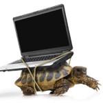 computadora lenta como tortuga
